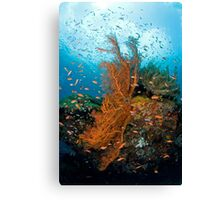 Seafan community Canvas Print