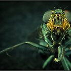 Hi, I am an Insect by Sime Jadresin