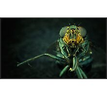 Hi, I am an Insect Photographic Print
