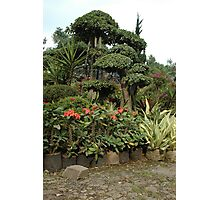 tropical garden Photographic Print