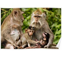 Macaca Moms & Sons Poster