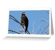 Ruler of the skies Greeting Card