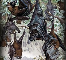 Indian Flying-fox painting  by marmur