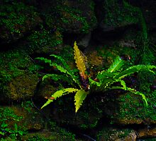 Fern in the Grotto by michaelBstone