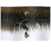 Great Blue Heron Reflection Poster