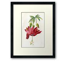 FLOWER LITHOGRAPH Framed Print