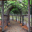 arched pathway by Carol  Lewsley