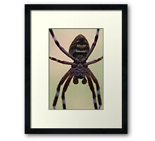 Spider in your face, Welstead, Western Australia Framed Print