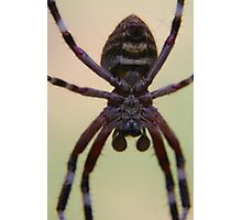 Spider in your face, Welstead, Western Australia Photographic Print