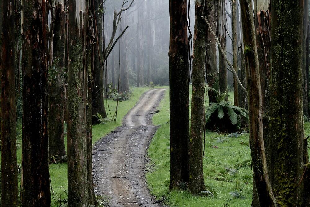 Bicentennial National Trail - Healesville end (Victoria) by Vikki Shedden Photography