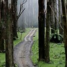 Bicentennial National Trail - Healesville end (Victoria) by saltbushbill