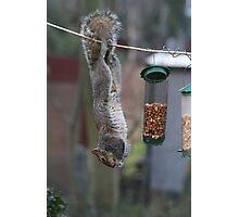 Squirrel 1 - Just hanging around! Photographic Print