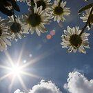 Summer by Alina Kurbiel