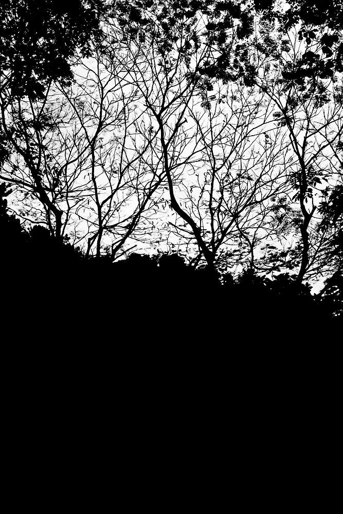 Tree Silhouettes on Mt Merapi, Java, Indonesia by Ashlee Betteridge