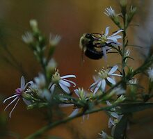 bee @ amicalola falls by clane
