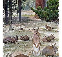 Painting of european rabbits by marmur