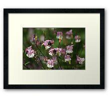 A Host of Faery Flowers! Framed Print
