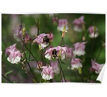 A Host of Faery Flowers! Poster