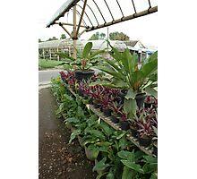 tropical garden Photographic Print