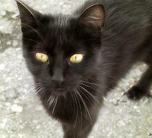 Black Cat 1 by Christopher Johnson