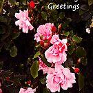 Rose Cascade Greeting card by sarnia2