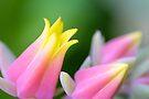 A pastel mood by missmoneypenny