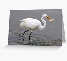 Egret Catching a Fish Greeting Card