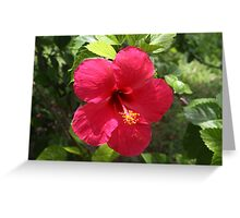 Beauty at Noon Greeting Card