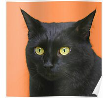 All Hallows Eve Black Cat Poster