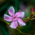 New life by Charuhas  Images