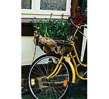 Yellow Bicycle Photographic Print