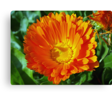 Orange lover's special Canvas Print