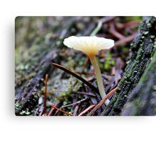 Mt. Rainier Mushroom Canvas Print