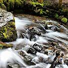 Rainier Trail Waterfall by Rick Lawler
