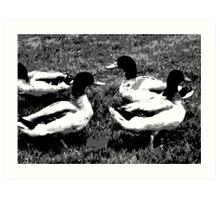 Mallard Ducks Artwork in Black, Gray and White Art Print