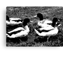 Mallard Ducks Artwork in Black, Gray and White Canvas Print