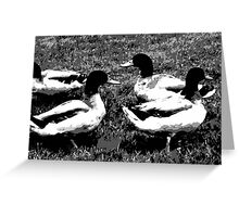 Mallard Ducks Artwork in Black, Gray and White Greeting Card