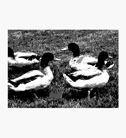 Mallard Ducks Artwork in Black, Gray and White Photographic Print
