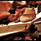 Book of Seasons by Jemma Ryan