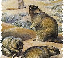 Painting of The bobak marmot by marmur