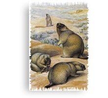 Painting of The bobak marmot Canvas Print
