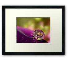 Bee Drop Framed Print