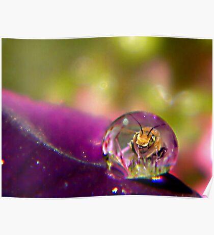 Bee Drop Poster
