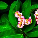 Flowers and Leaves by Charuhas  Images