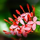 Flowers n Buds 101 by Charuhas  Images