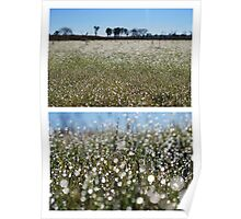 Morning Frost on Dangars Lagoon - Diptych Poster