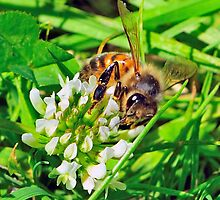 Bee On Flower 0018 by mike1242