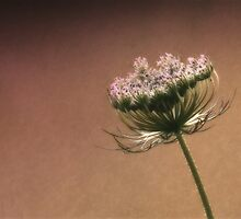 The Princess (Queen Anne's Lace) by Lori Deiter
