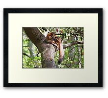 Grey Fox Framed Print
