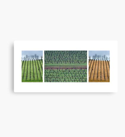 Vineyard Compilation Canvas Print